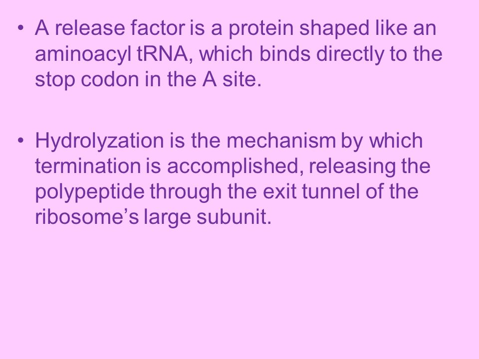 A release factor is a protein shaped like an aminoacyl tRNA, which binds directly to the stop codon in the A site.