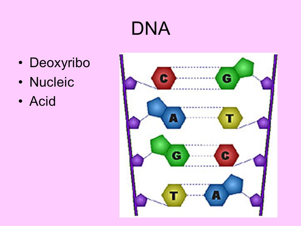 DNA Deoxyribo Nucleic Acid