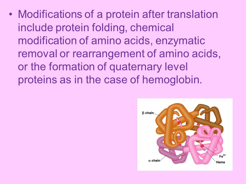 Modifications of a protein after translation include protein folding, chemical modification of amino acids, enzymatic removal or rearrangement of amino acids, or the formation of quaternary level proteins as in the case of hemoglobin.