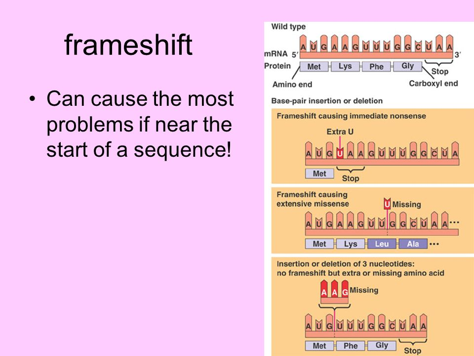 frameshift Can cause the most problems if near the start of a sequence!
