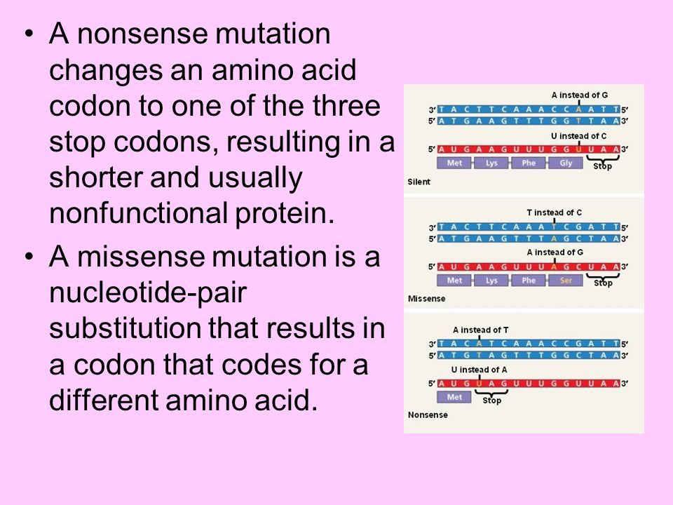 A nonsense mutation changes an amino acid codon to one of the three stop codons, resulting in a shorter and usually nonfunctional protein.