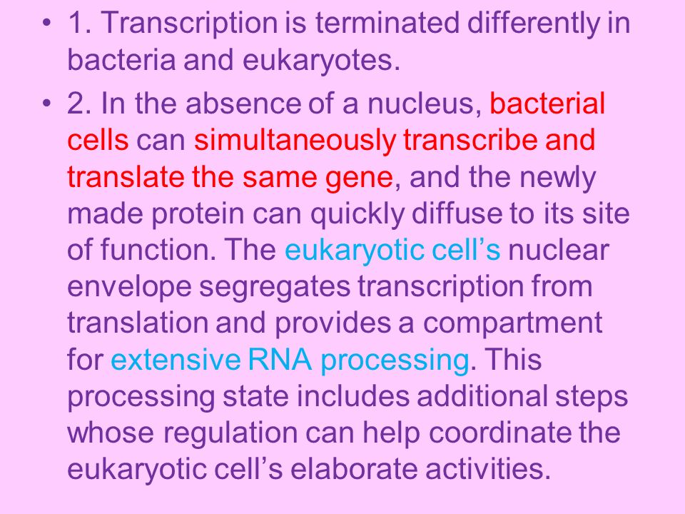 1. Transcription is terminated differently in bacteria and eukaryotes.