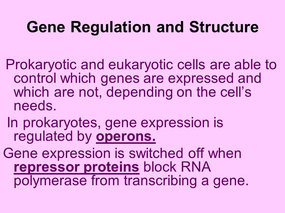 Gene Regulation and Structure