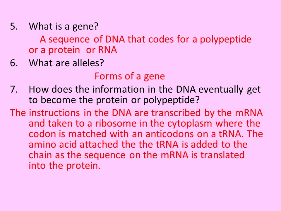 What is a gene A sequence of DNA that codes for a polypeptide or a protein or RNA. What are alleles