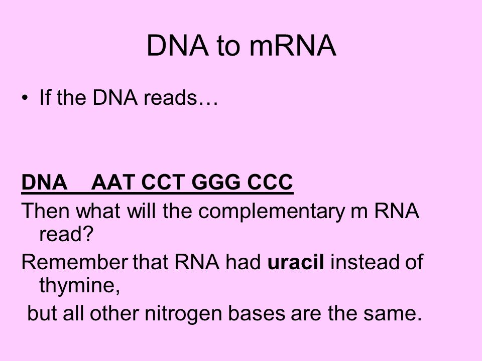 DNA to mRNA If the DNA reads… DNA AAT CCT GGG CCC