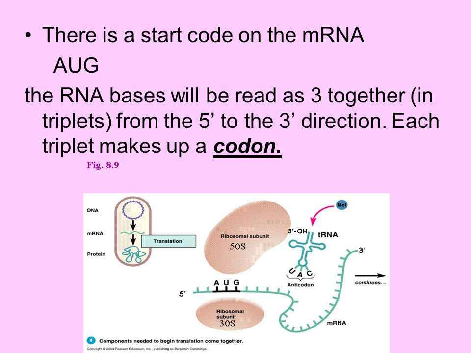 There is a start code on the mRNA