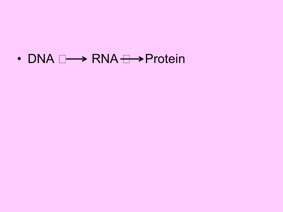DNA  RNA  Protein