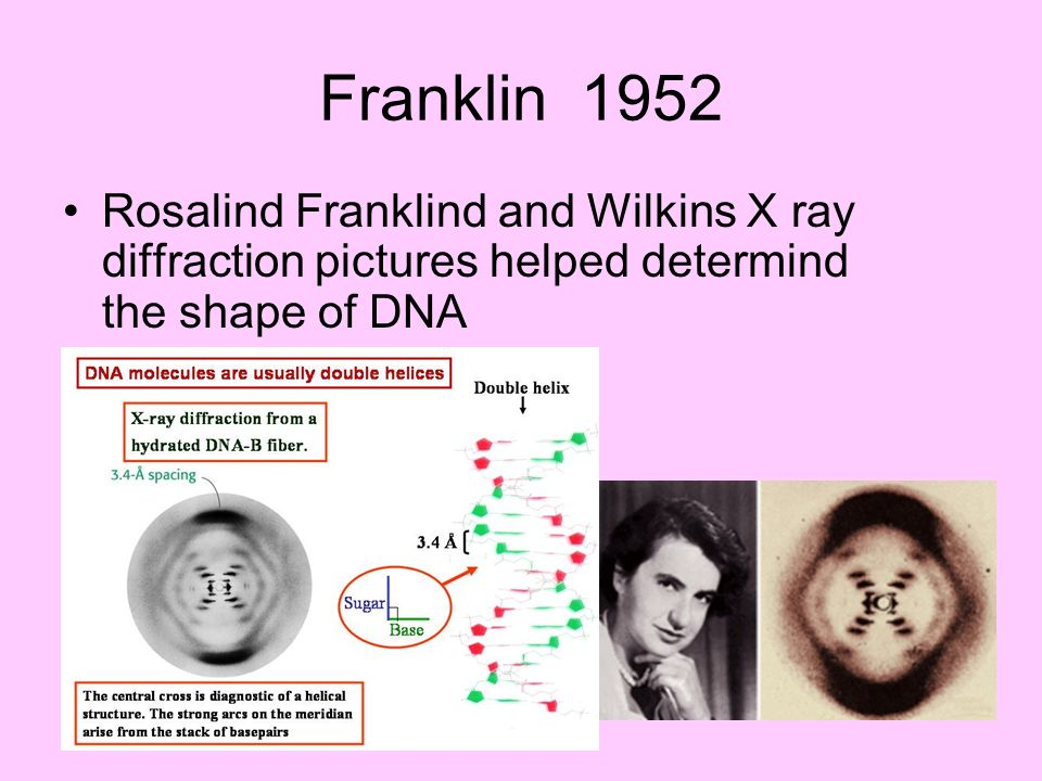 Franklin 1952 Rosalind Franklind and Wilkins X ray diffraction pictures helped determind the shape of DNA.