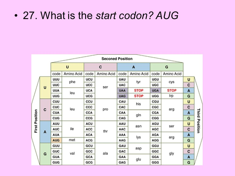 27. What is the start codon AUG