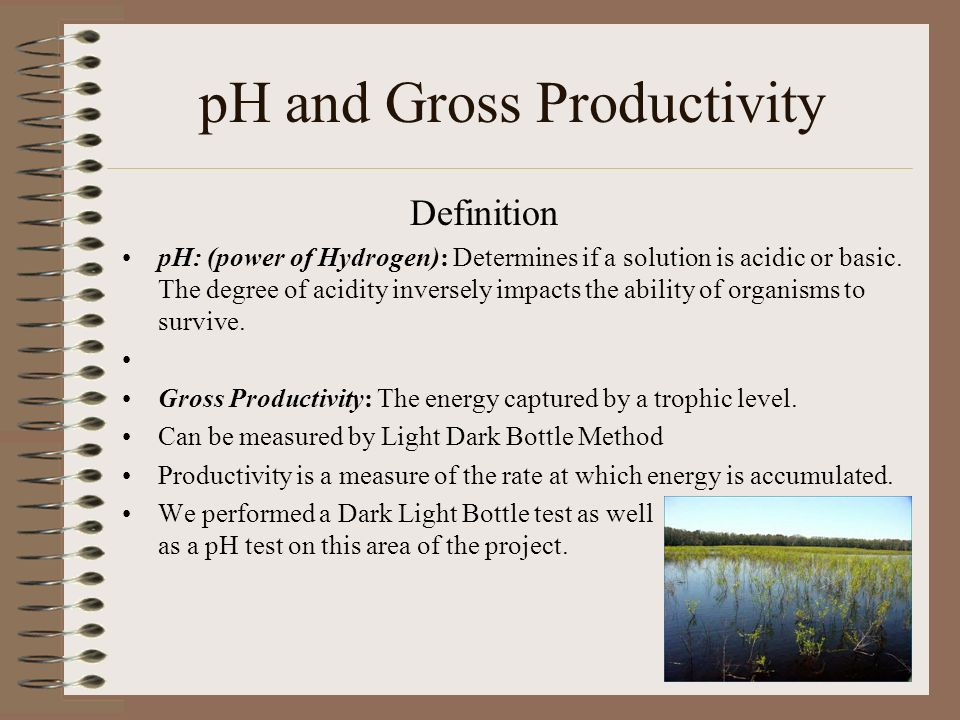 pH and Gross Productivity