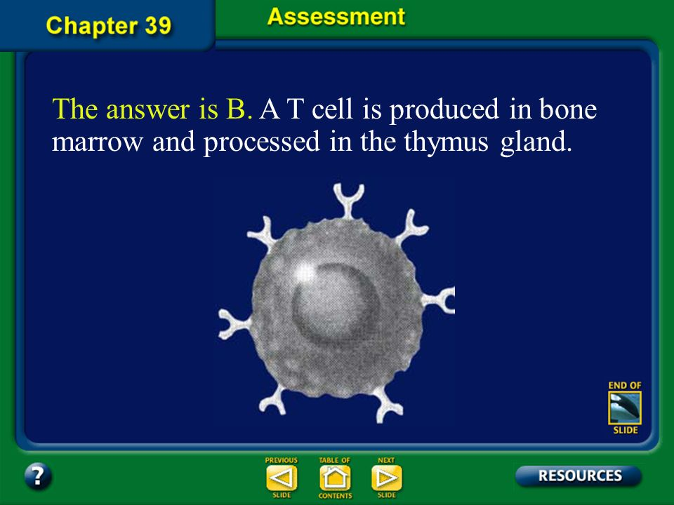 The answer is B. A T cell is produced in bone marrow and processed in the thymus gland.