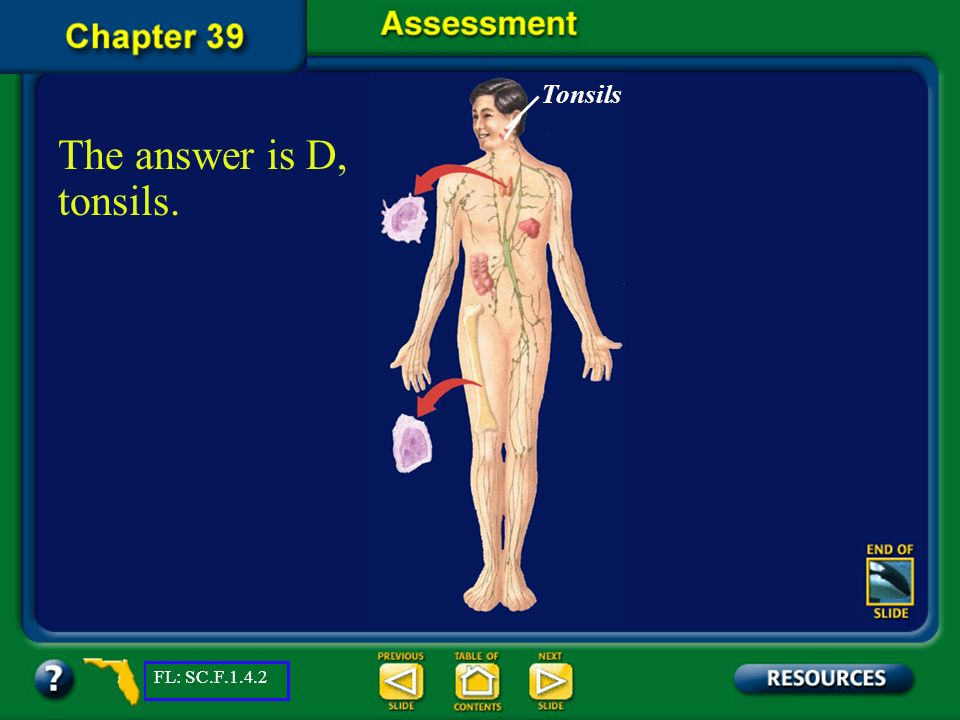 Tonsils The answer is D, tonsils. FL: SC.F.1.4.2 Chapter Assessment