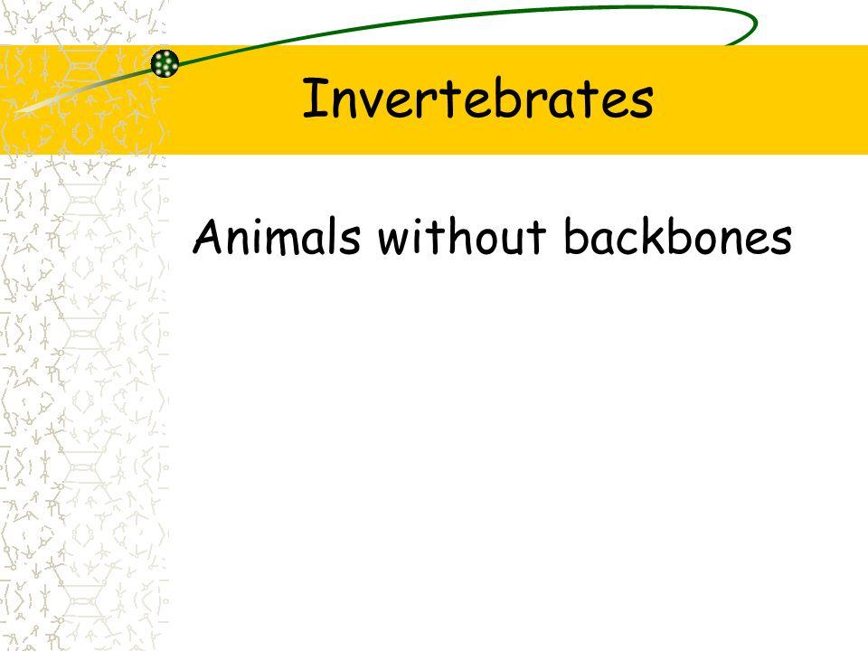 Invertebrates Animals without backbones