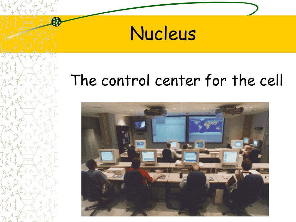 Nucleus The control center for the cell