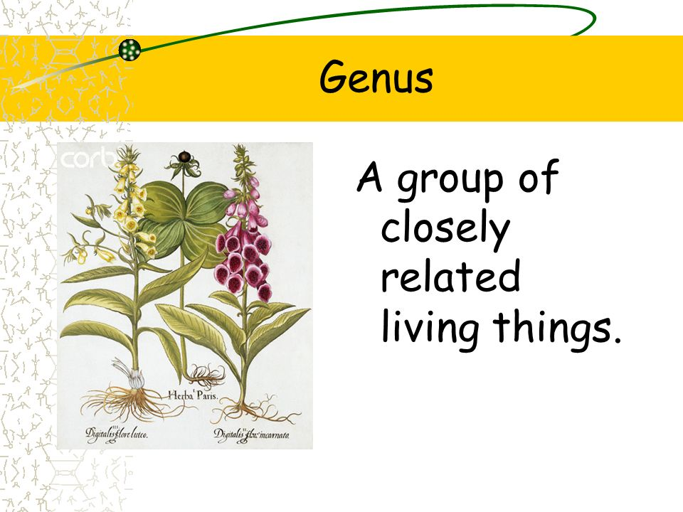 Genus A group of closely related living things.