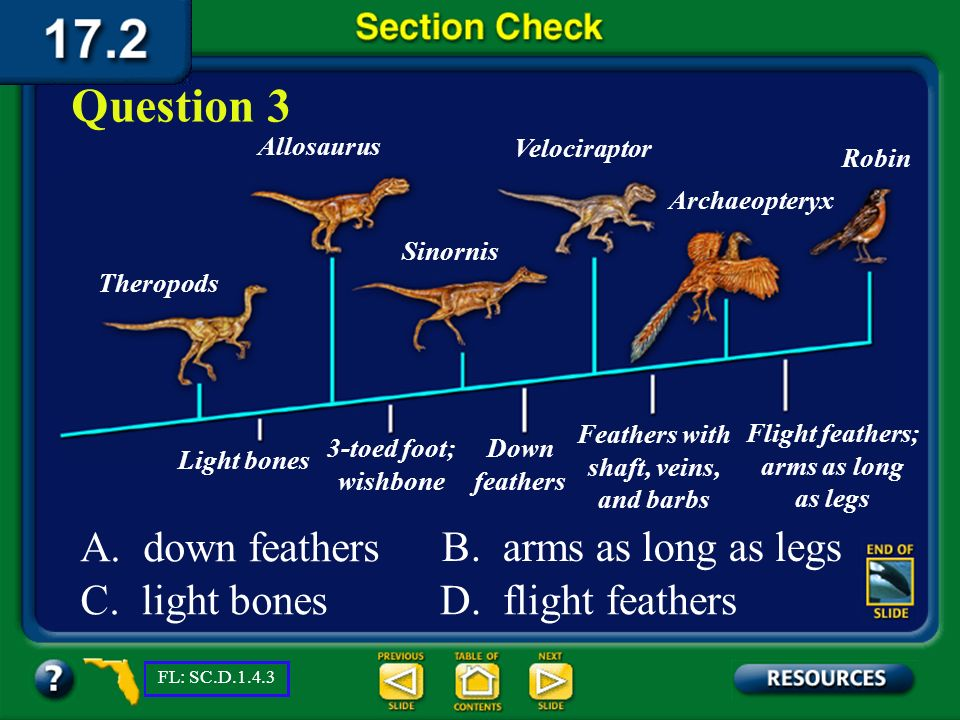 Question 3 A. down feathers B. arms as long as legs C. light bones