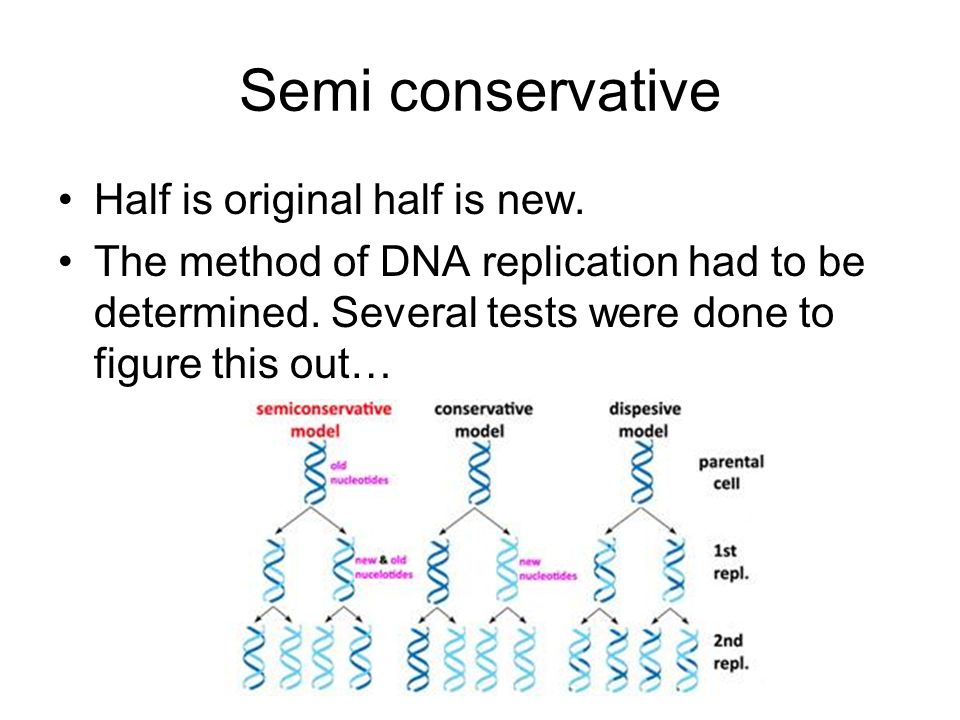 Semi conservative Half is original half is new.