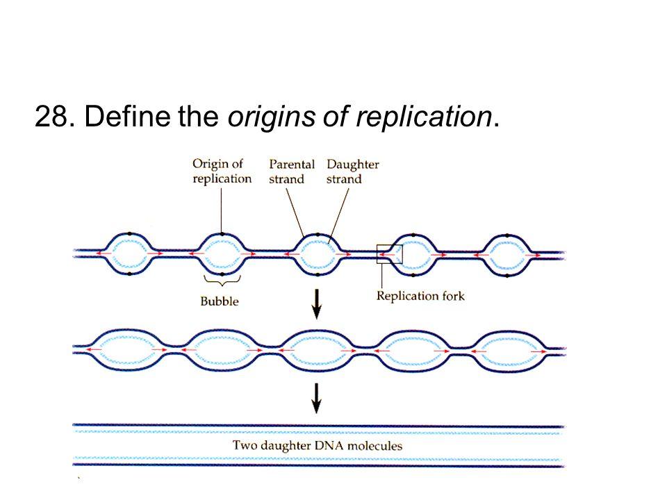 28. Define the origins of replication.