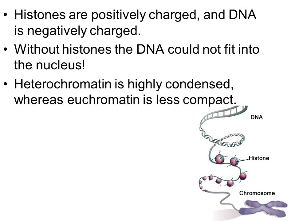 Histones are positively charged, and DNA is negatively charged.