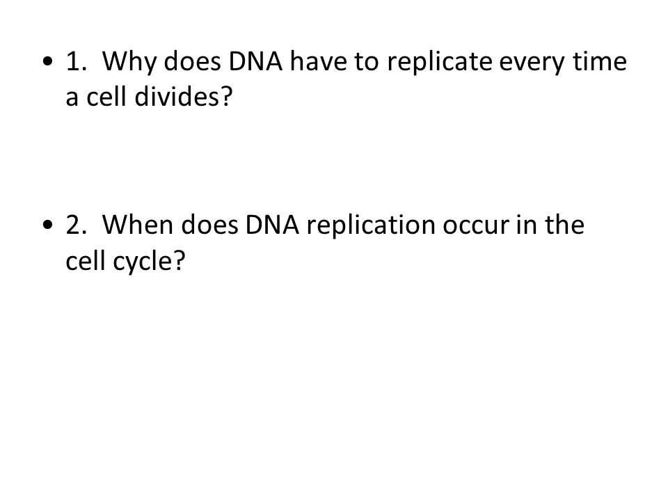 1. Why does DNA have to replicate every time a cell divides