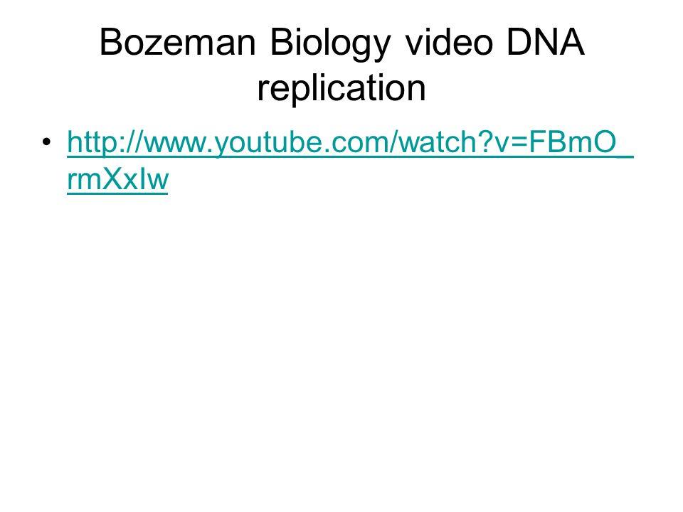 Bozeman Biology video DNA replication