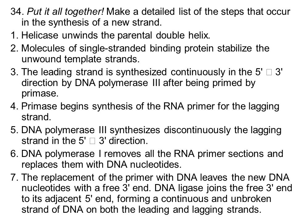 34. Put it all together! Make a detailed list of the steps that occur in the synthesis of a new strand.
