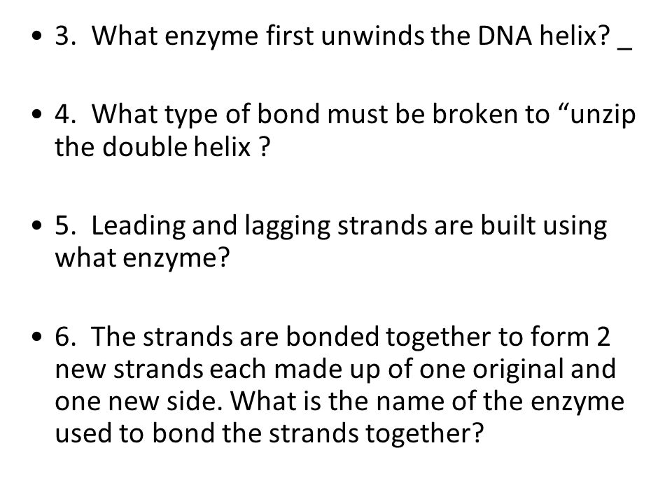 3. What enzyme first unwinds the DNA helix _