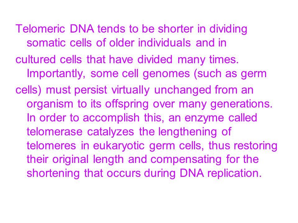 Telomeric DNA tends to be shorter in dividing somatic cells of older individuals and in