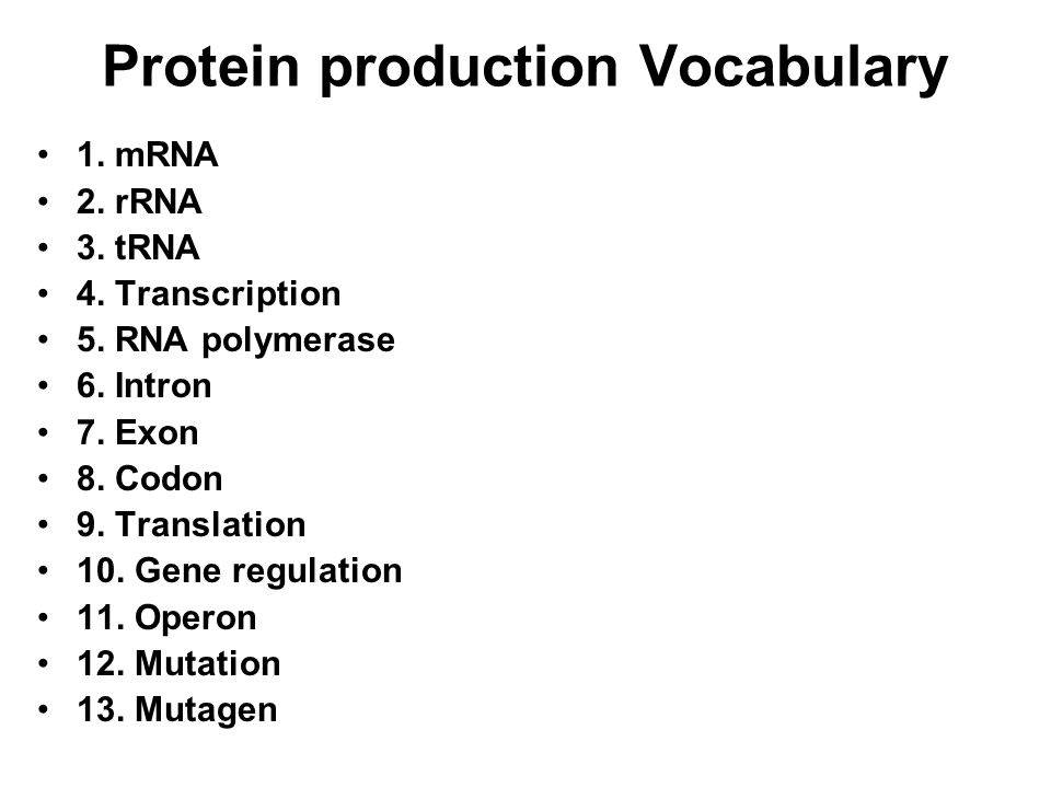 Protein production Vocabulary
