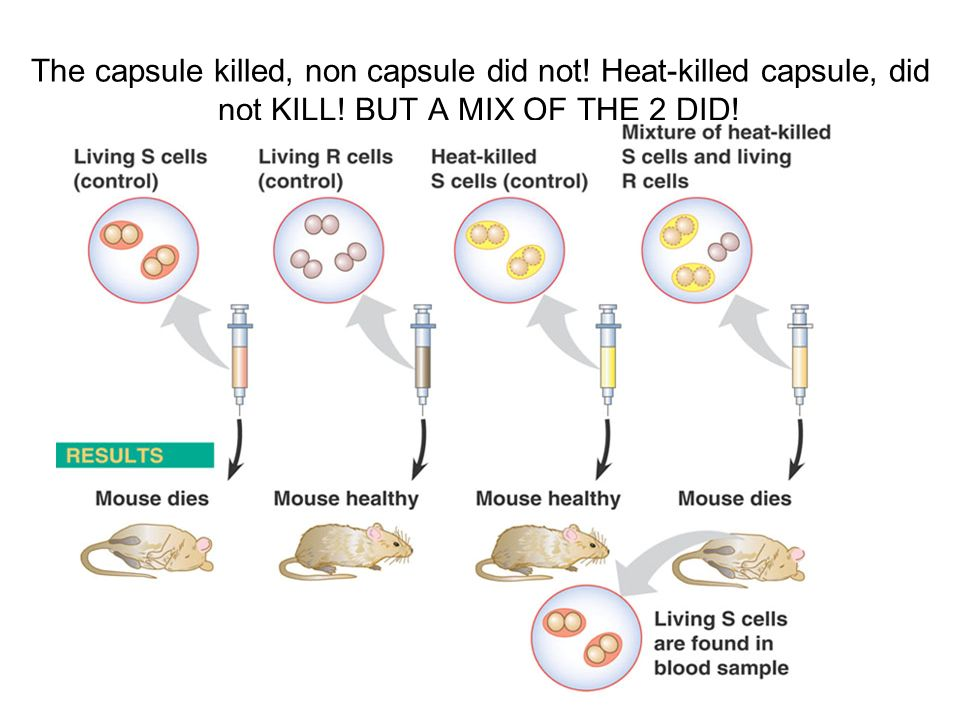The capsule killed, non capsule did not