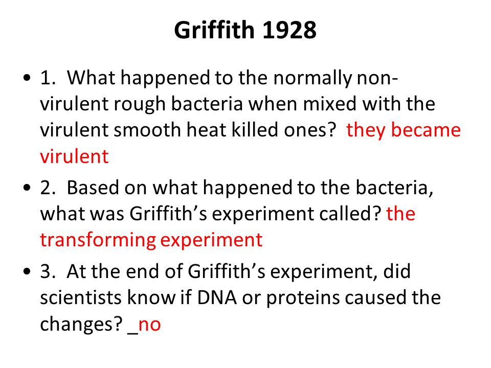 Griffith 1928