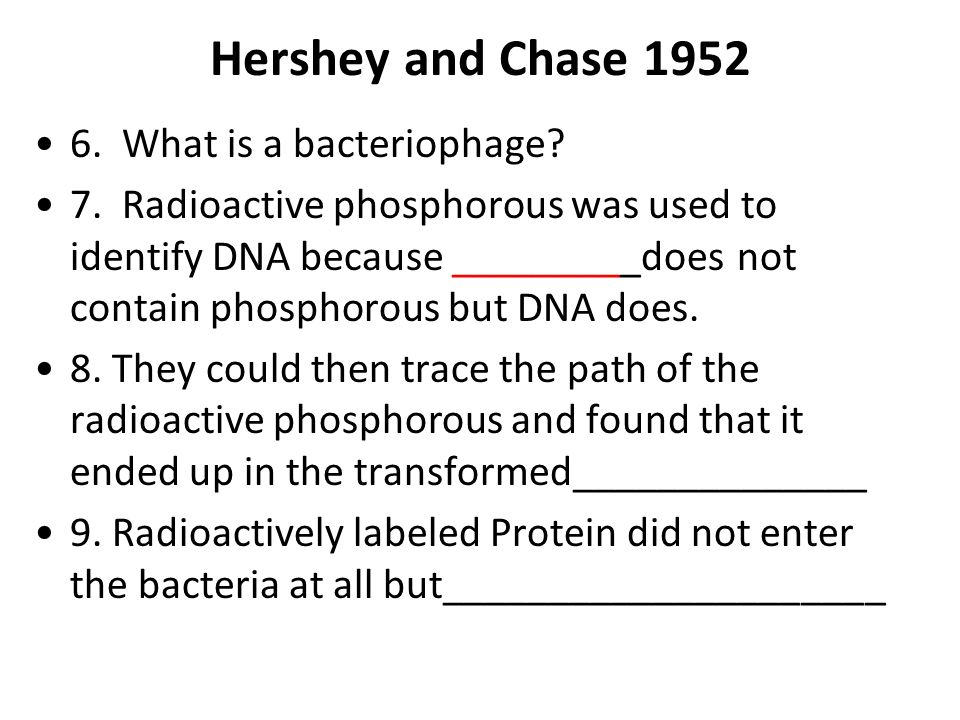 Hershey and Chase What is a bacteriophage