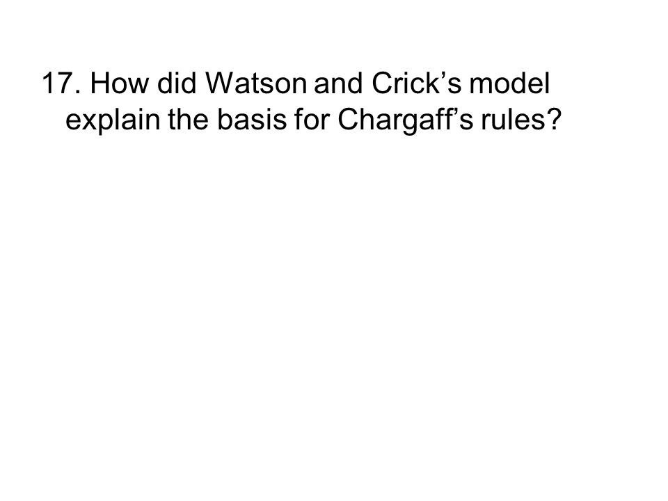 17. How did Watson and Crick's model explain the basis for Chargaff's rules