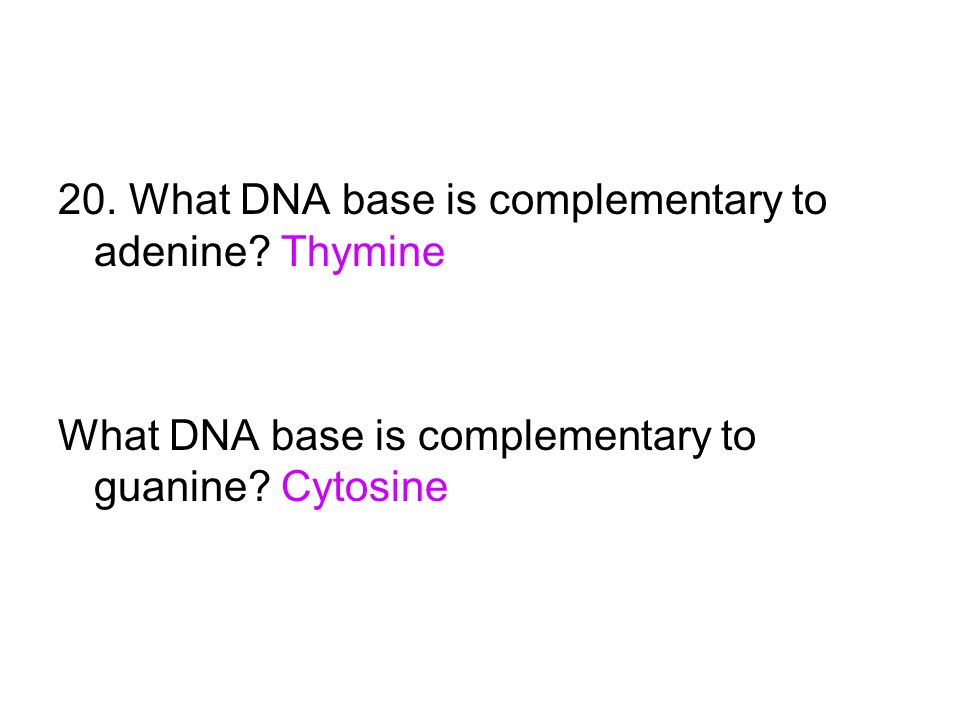 20. What DNA base is complementary to adenine Thymine