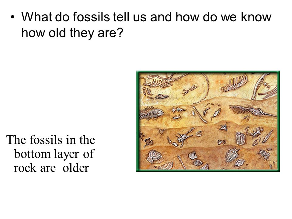 What do fossils tell us and how do we know how old they are