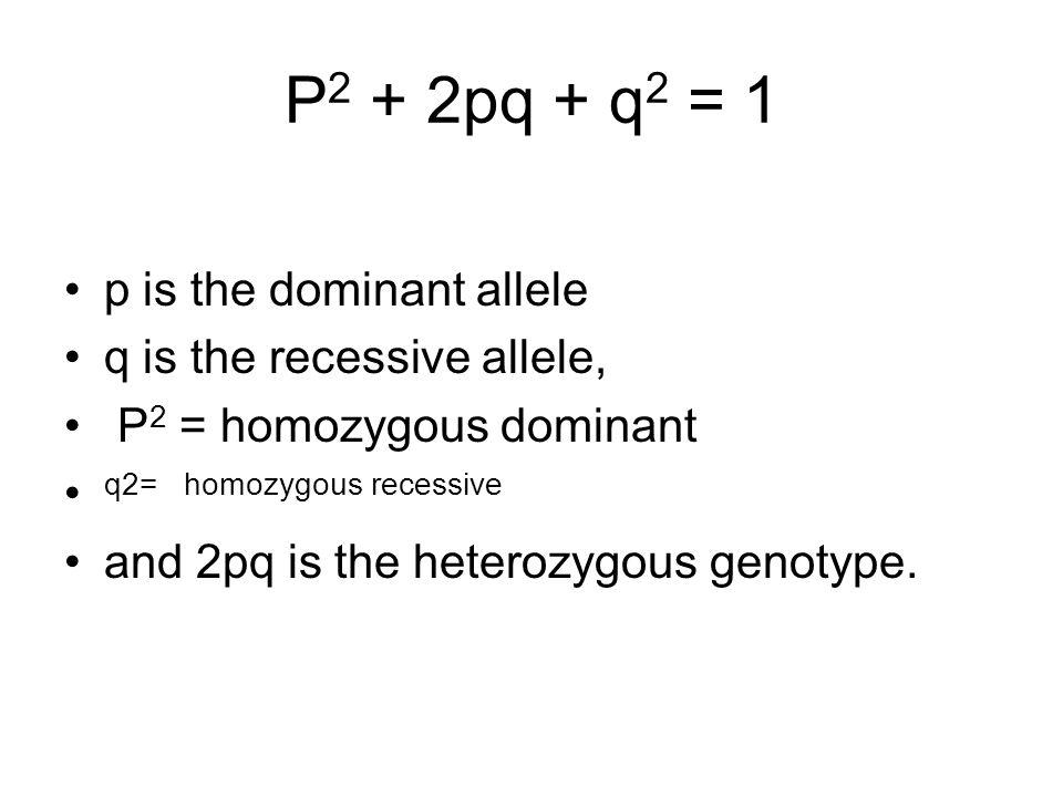 P2 + 2pq + q2 = 1 p is the dominant allele q is the recessive allele,