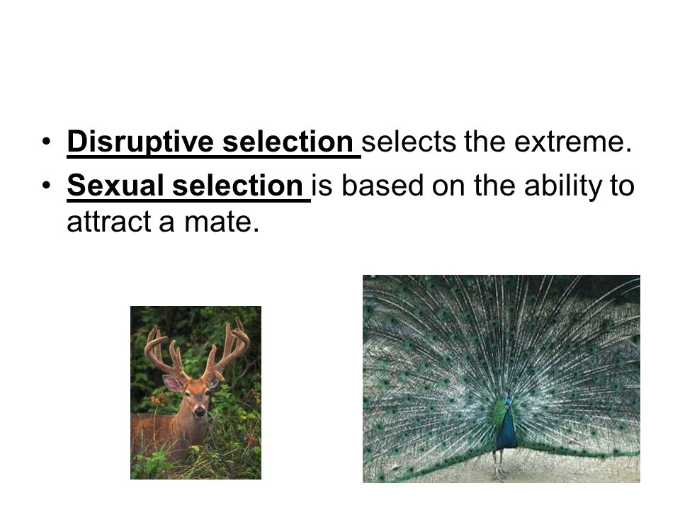 Disruptive selection selects the extreme.