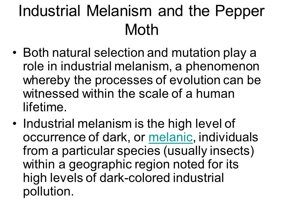Industrial Melanism and the Pepper Moth