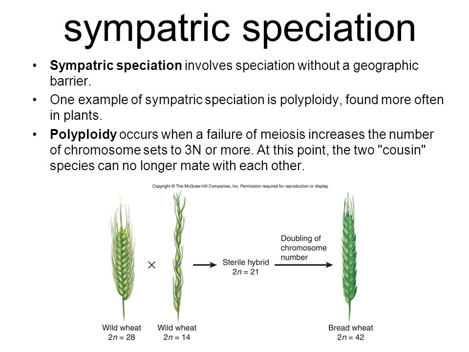 sympatric speciation Sympatric speciation involves speciation without a geographic barrier.