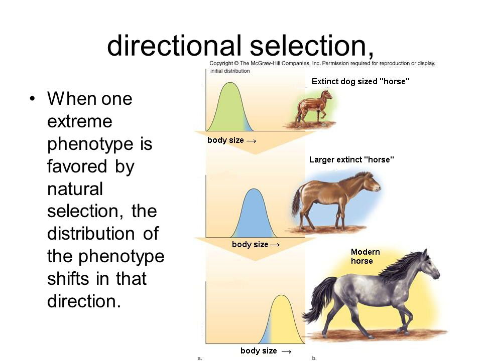 directional selection,