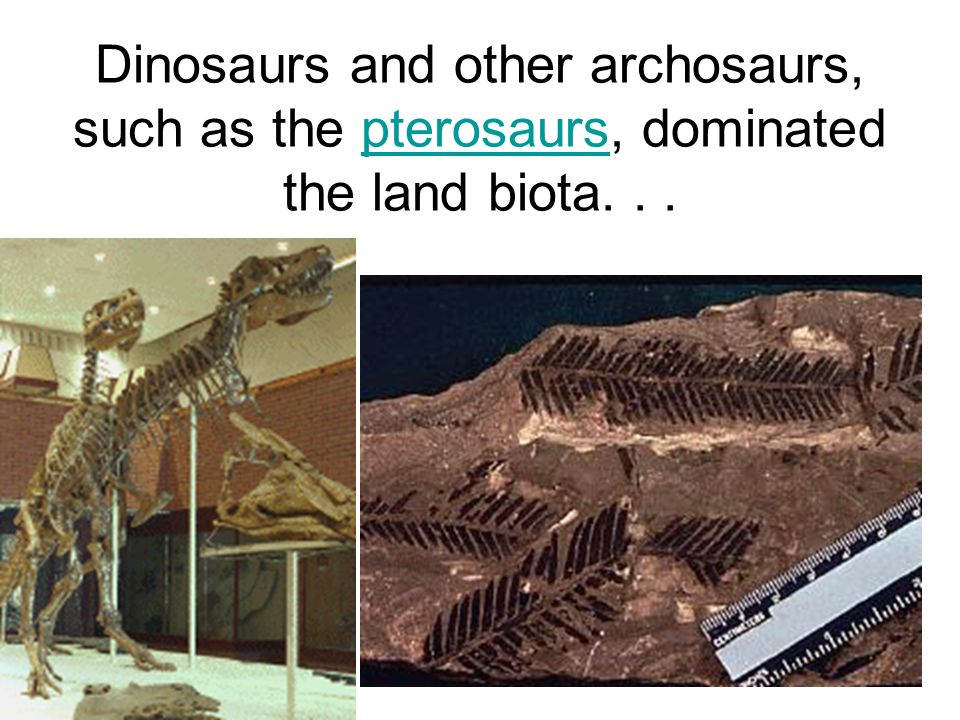 Dinosaurs and other archosaurs, such as the pterosaurs, dominated the land biota. . .