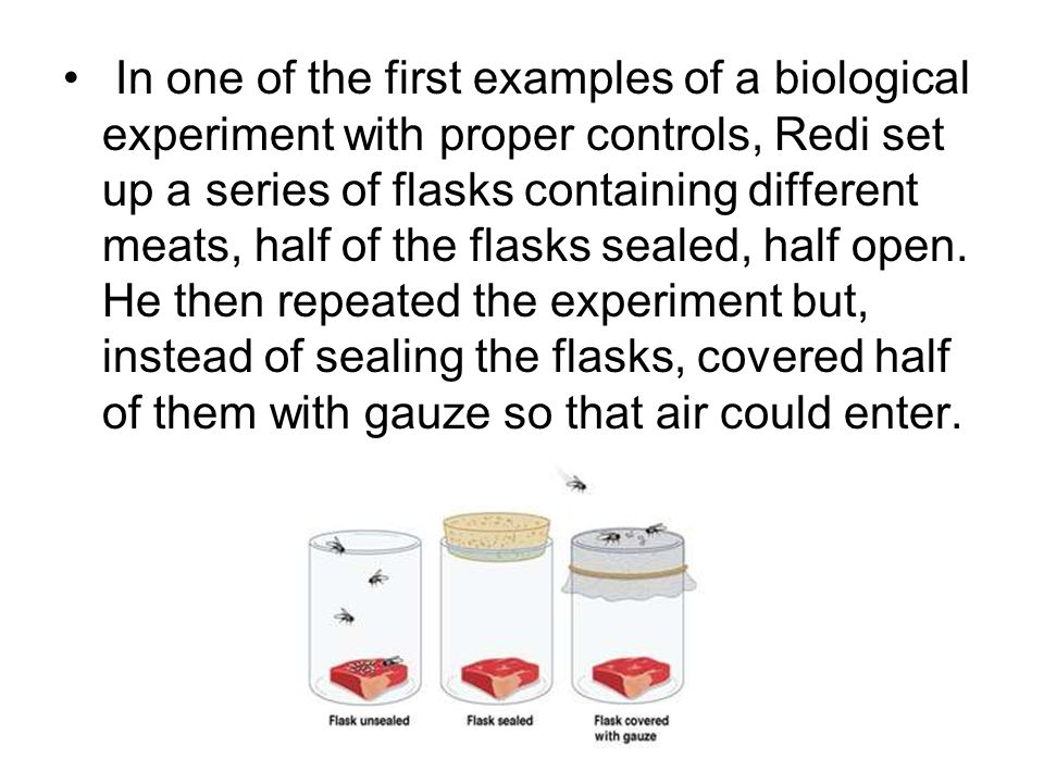 In one of the first examples of a biological experiment with proper controls, Redi set up a series of flasks containing different meats, half of the flasks sealed, half open.