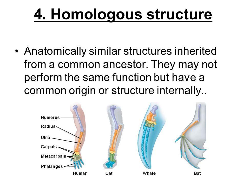 4. Homologous structure