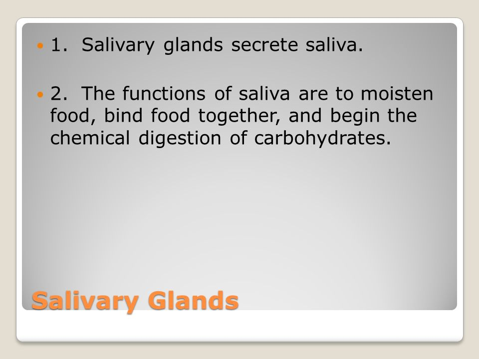 Salivary Glands 1. Salivary glands secrete saliva.