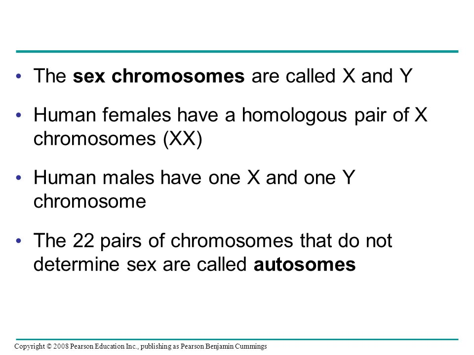 The sex chromosomes are called X and Y