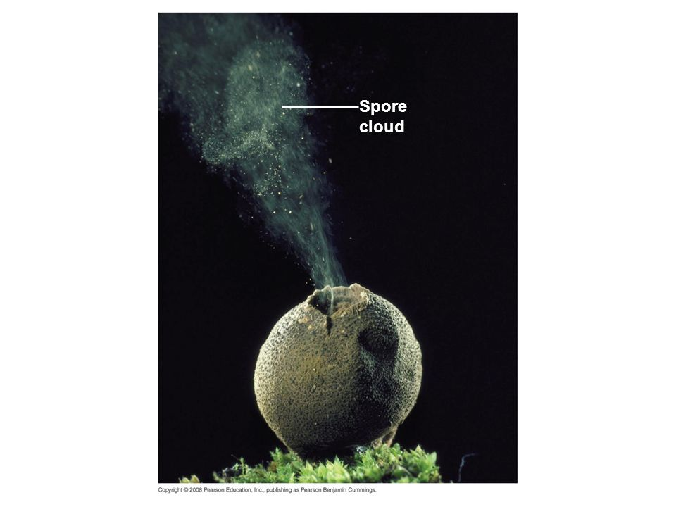Fig Spore cloud Figure Overproduction of offspring