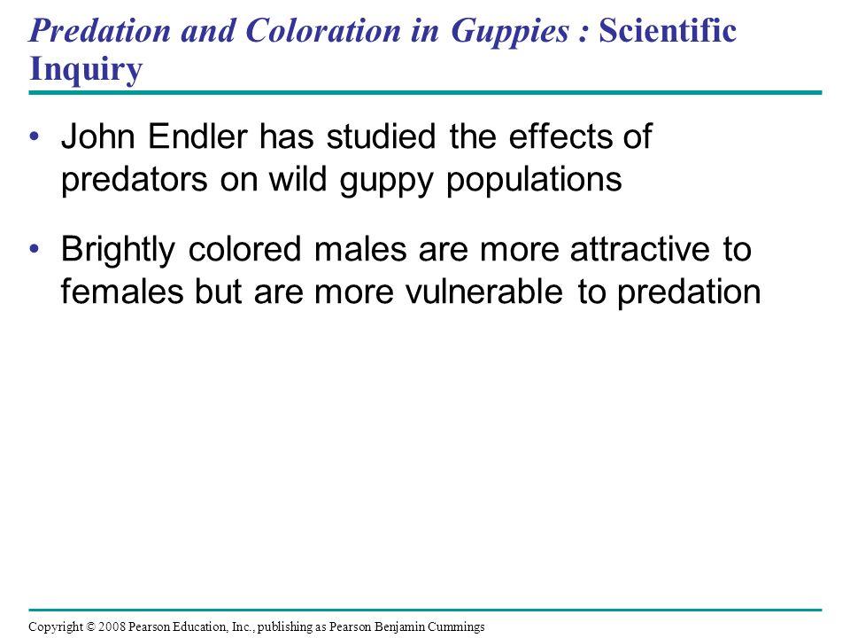 Predation and Coloration in Guppies : Scientific Inquiry