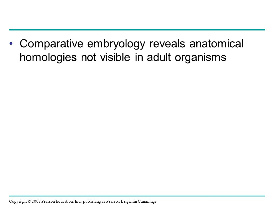 Comparative embryology reveals anatomical homologies not visible in adult organisms