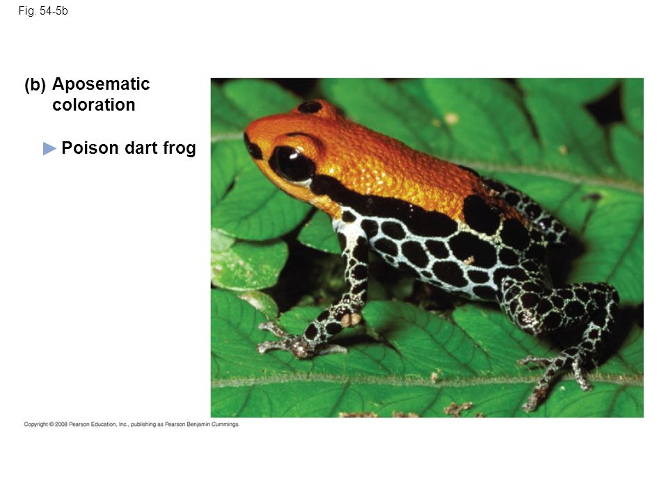(b) Aposematic coloration Poison dart frog Fig. 54-5b