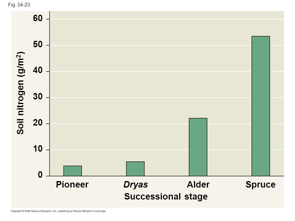 60 50 40 Soil nitrogen (g/m2) 30 20 10 Pioneer Dryas Alder Spruce